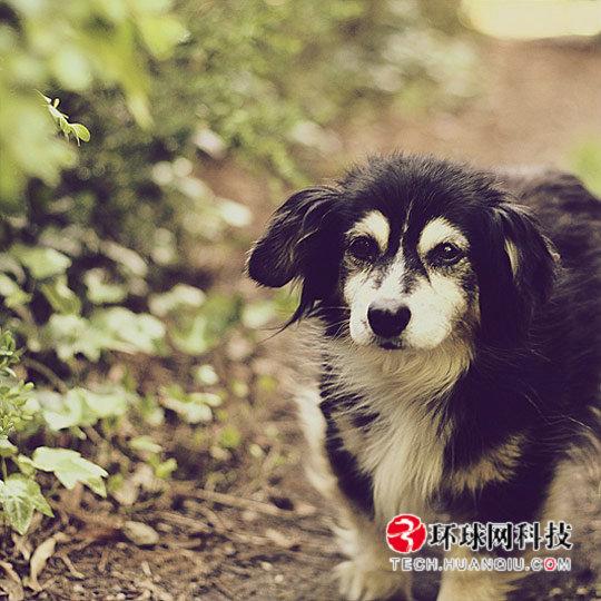 可爱又搞笑! 全球最帅气的宠物狗(组图)