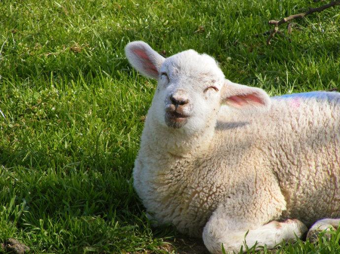 高清:让你开怀的动物照片