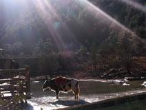 纳西族心目中神圣的山——玉龙雪山