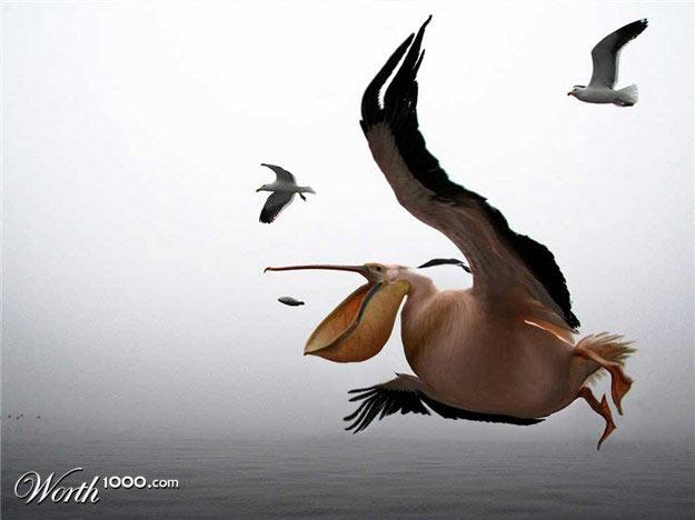 哭笑不得!你没见过的动物发福照 - 股色股香 - 海浪的博客