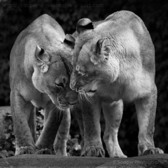 壁纸 大象 动物 550_550
