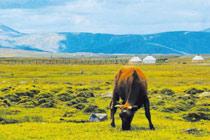 新疆阿勒泰:青格里的未解之迷