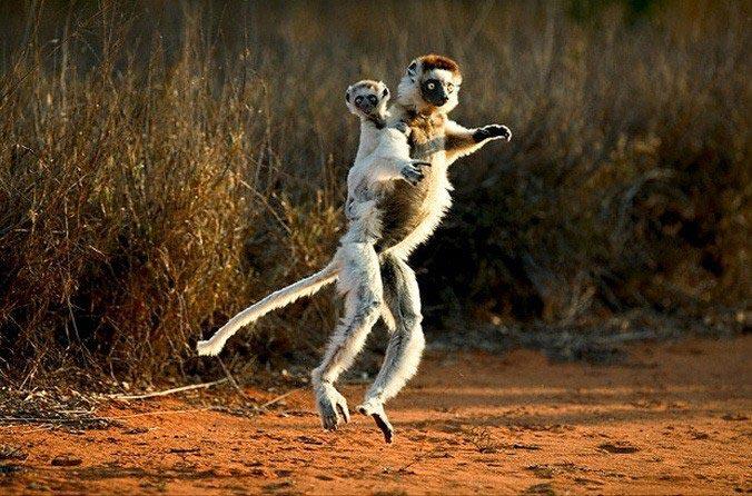 动物家庭超有爱瞬间 笑死人了 最可爱动物萌图