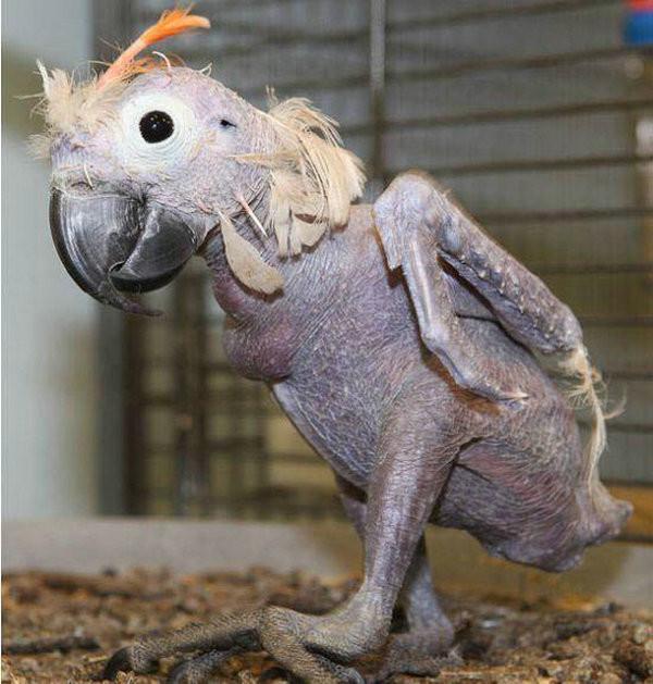 梦见很多奇怪的动物