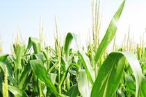 民和因地制宜发展打造农业样板基地