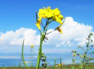 青海金银滩草原景色