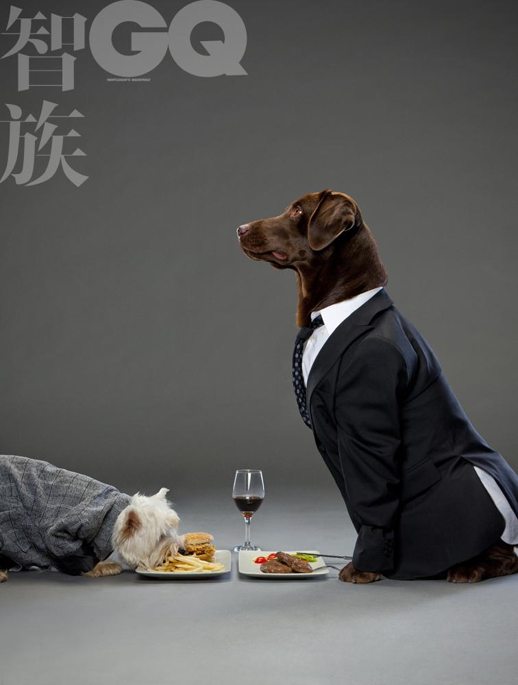 GQ超萌大片 狗狗演绎传神的职场人生