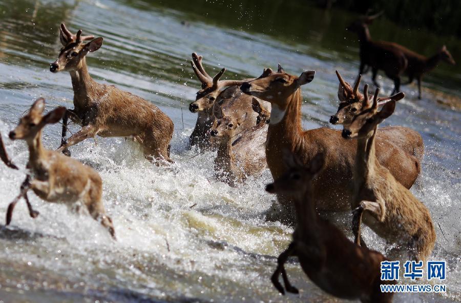 洪水入侵曼谷野生动物园