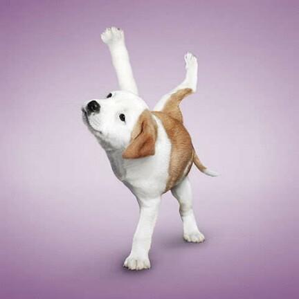 动物瑜伽图片