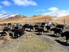 行走川滇——守望藏区的文化之魂
