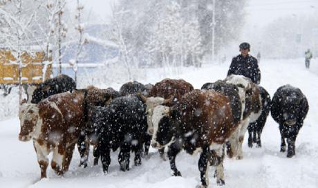 新疆阿勒泰普降大雪