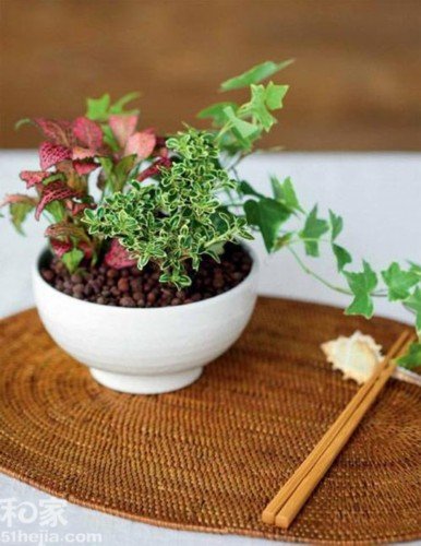 幼儿园植物花盆diy