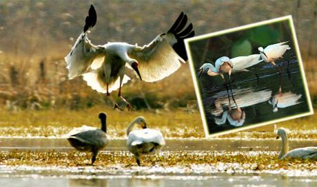 候鸟天堂--鄱阳湖