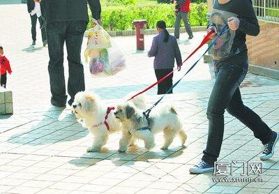 宠物狗却给居民带来了不少困扰:狗狗随地大小便,狗叫声扰民,甚至伤人
