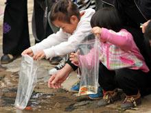 市民将获得的鱼苗投放到锦江中