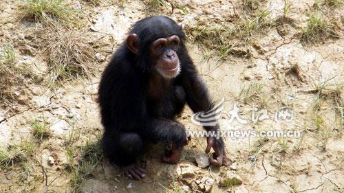 南昌动物园里可认养的动物有很多哦-动物园推出动物认养活动 认养后图片
