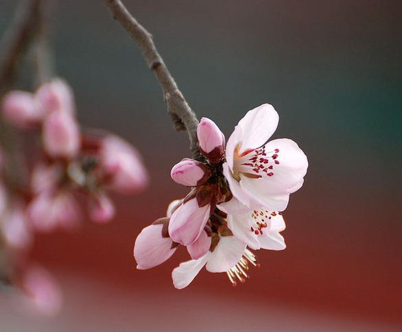 春分节气的气候及物候特点 ...