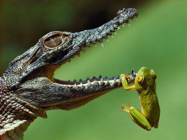 尼罗鳄是地球上最凶猛、最致命的动物之一-鱼类也凶猛 世界最让人恐