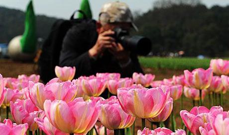 2012湖南世界名花节开幕 园内百花齐争艳
