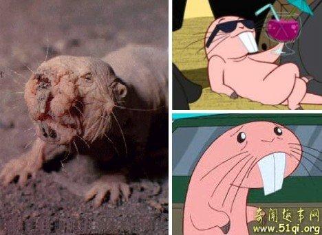 盘点世界上最丑陋的动物 我很丑但是很可爱!