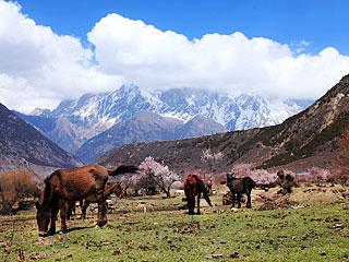 雅魯藏布大峽谷牧場