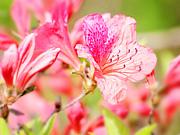 春季赏花——杜鹃花[组图]