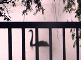"""""""我和春天有个约会""""北京海淀区田村湿地候鸟"""