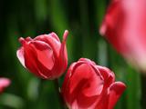 """""""我和春天有个约会""""中山公园美丽郁金香"""