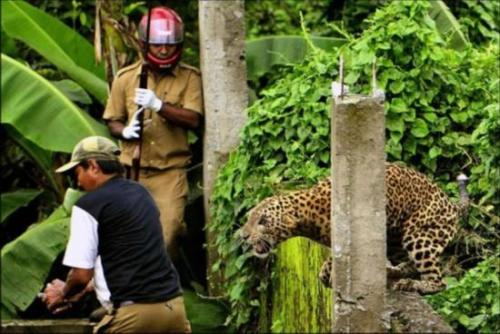 动物袭人的惊险瞬间图片