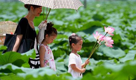 广西柳江:玉藕之乡生态游