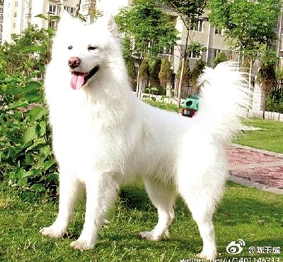 (图片来自陈先生微博)-中国四大狗市在开封 失踪宠物狗从那卖到