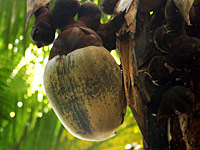 塞舌尔风情:丰富独特的动植物
