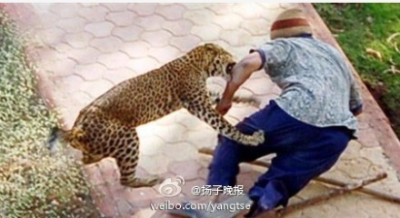 恐怖娃娃 福建动物园豹子伤人