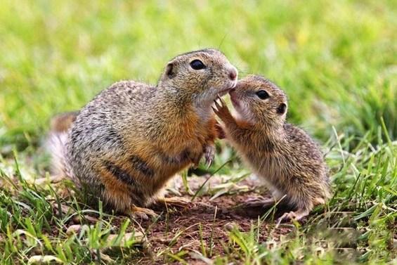 动物世界温馨亲子照