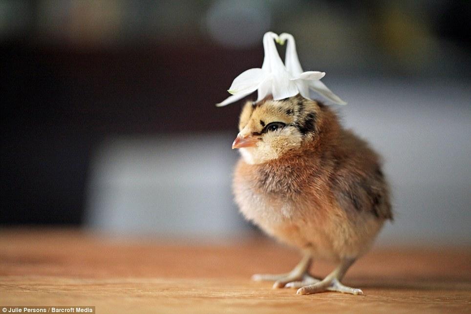动物帽子diy