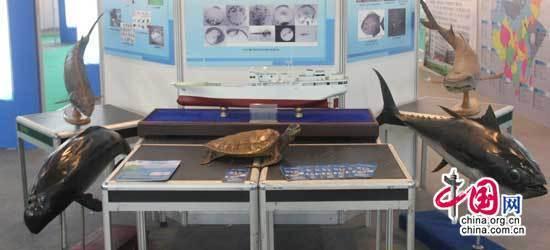 首屆國際海産品博覽會上展品眾多 琳瑯滿目
