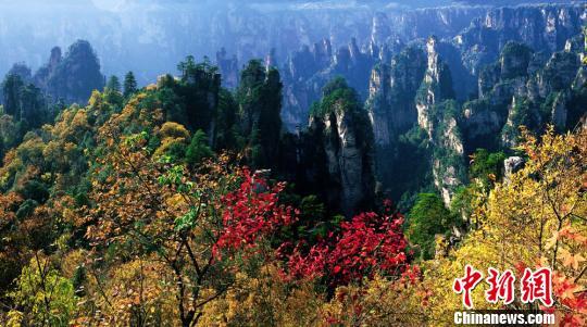 世界各国艺术家在张家界国家森林公园快乐地歌唱。 记者19日晚间在纪念中国国家森林公园建立三十周年大会上获悉,张家界国家森林公园建园30年来,累计接待游客2984.3万人,实现旅游总收入347亿元,解决社会就业近20万人。 张家界国家森林公园位于湖南省西北部,总面积48平方公里,是1982年9月成立的中国首个国家森林公园,其前身是张家界国营农场。境内旅游资源丰富,以地球上独一无二的张家界地貌著称,集雄、奇、幽、野、秀为一体,汇峰、谷、壑、林、水为一身,具有极高的地质科研和美学价值,并拥有国家一、二级