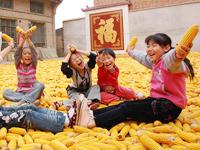 山西运城市新绛县的几个孩子坐在晾晒的玉米上玩耍。 (图片来源:新华网)