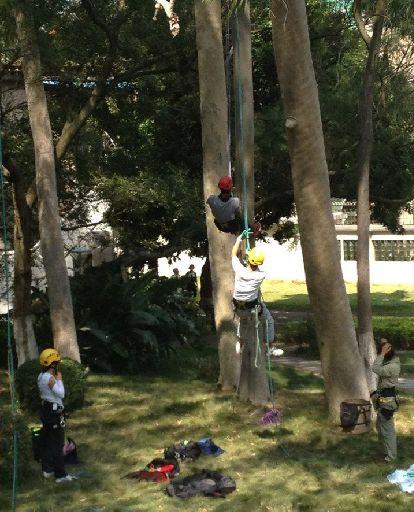 厦门大学开设攀树运动课 引发热议