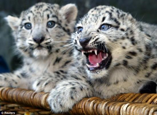 祁连山保护区发现珍稀野生动物