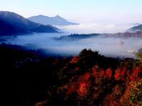 安徽:雾锁黄山[组图]