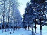 黑龙江畔初冬美景[组图]