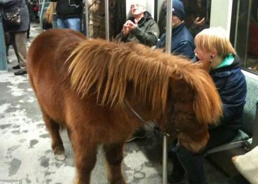 德国地铁车厢惊现小矮马