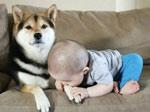 當小孩和狗狗一起養