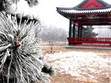 北京雾霾下的美丽雾凇