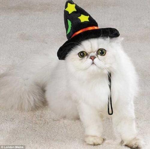 小猫头步骤图片