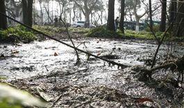 杭州西湖楊公堤附近杉樹林內大面積綠化被腐蝕。27日,杭州西湖被曝楊公堤段發現一水管直排污水進入杉樹林腐蝕周邊綠化。汪恩民 攝