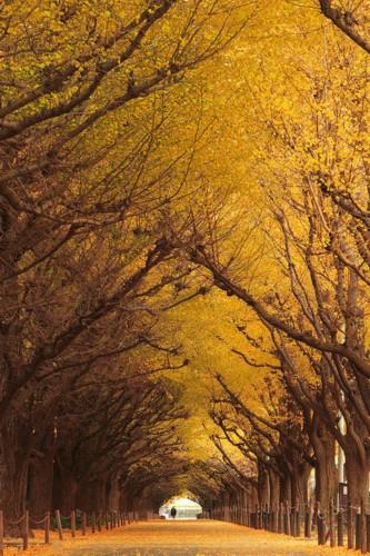 12】人间仙境!世界上十个最美的树隧道