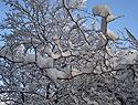 春雪似冬雪