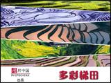 [图片策划]多彩梯田 梯田 多彩 地理 色彩 农业